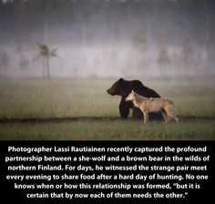 Friends from the wilderness