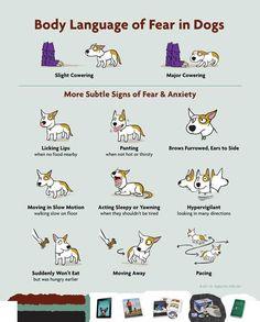How To Teach Dog To Bark Om Command