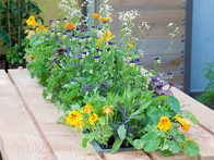 Decorate a wooden picnic table with an edible meadow that has been sunk into the table. Nasturtiums, pot marigolds, and violas all have vibrant blooms that taste as good as they look. Ensure that the planter has drainage holes.