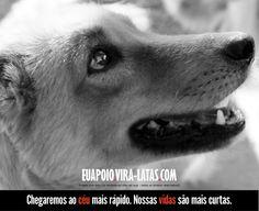 #VL #viralatasnoscinemas