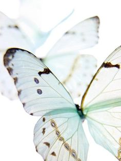 """""""Transparency of the heart, lightness of flight, and beauty that steals one's breath away."""" ~ETS #butterflies #elizabeththankfulshannonquote"""