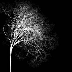 [Cabeleira livre! ]  Gostou? Curta nossa página e compartilhe nossa arte!  Imagina vestir a arte entrama? Confira o nosso site, entregamos em todo o Brasil!  http://entrama.com.br  Instagram: @arte.entrama  Twitter: @Arte.Entrama  Pinterest: pinterest.com/arte.entrama  #entrama #arte #design #poesia #camiseta #estampa #cabeleira #livre #hair #cachos #cabelo #crespo #tree #árvore