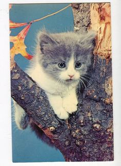 A lovely Gray  and white Kitten Postcard by sharonfostervintage, $2.00