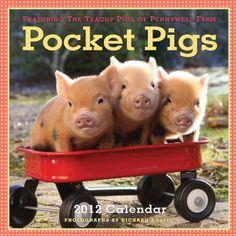 Pocket Pigs 2012 Calendar: The Teacup Pigs of Pennywell Farm (Wall Calendar)