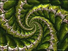 leaves spiral by Thomas Warnecke on 500px