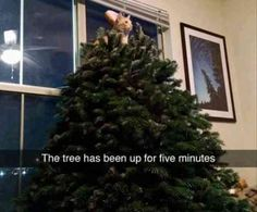 25 Funny Animal Pictures Of The Day