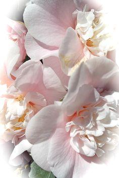 Carmellias Softly by Michele Myers My Flower, Flower Art, Paper Flowers Wedding, Flower Aesthetic, Camellia, Spring Time, Flower Designs, Art Work, Beautiful Flowers