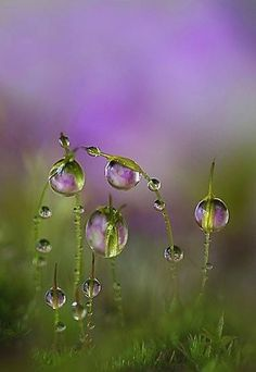 20 Ideas Flowers Photography Beautiful Dew Drops For 2019 Dew Drops, Rain Drops, All Nature, Amazing Nature, Fotografia Macro, Morning Dew, Early Morning, Water Droplets, Jolie Photo