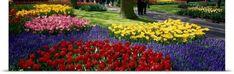 Poster Print Wall Art Print entitled Keukenhof Garden Lisse The Netherlands, None