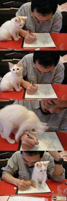 drawing art cat<< Me and my cat Loki every time I'm doing homework....