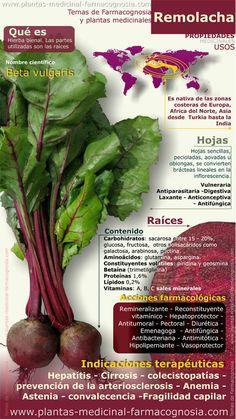 Propiedades y beneficios de la Remolacha. Infografia - Farmacognosia. Plantas medicinales