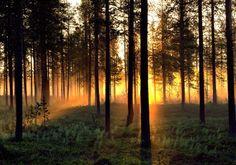 Midnight sun in Swedish Lapland