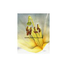 Watercolor flower painting 8x10 original floral painting home decor... ($75) ❤ liked on Polyvore featuring home, home decor and wall art