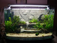 1000 images about pet ideas on pinterest cichlids for Fish tank background ideas
