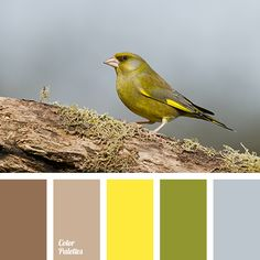 """dusty"" green, beige, bright yellow, canary yellow, chocolate, color of canary, color of cocoa, color of moss, color of stormy sky, color of wood, gray and yellow, gray-blue, green, khaki, shades of brown, Yellow Color Palettes."