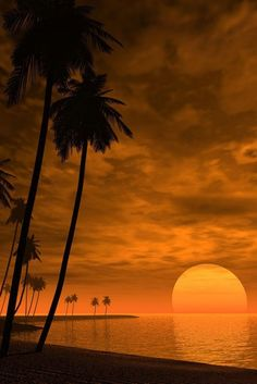 Beautiful sunset with palm trees