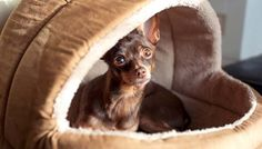 DIY Dog Bed Project: Some Ideas from Around the Internet   Top Dog Tips