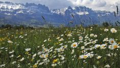 Καλλιέργειες εύκολες για αυτούς που ξεκινούν την κηπουρική – Geoponoi.Gr Mountains, Nature, Travel, Voyage, Viajes, Traveling, The Great Outdoors, Trips, Mother Nature