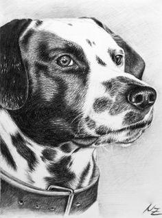 "Saatchi Online Artist Nicole Zeug; Drawing, ""Dalmatian - Dalmatiner"" #art"
