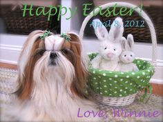 Happy Easter!  With love from Jen & Winnie