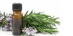 Olio essenziale di eucalipto: proprieta', benefici e i mille usi quotidiani