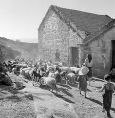History in Photos Old Pictures, Old Photos, Vintage Photos, History Of Portugal, As Time Goes By, Famous Photographers, Portugal Travel, North Africa, Vintage Photography