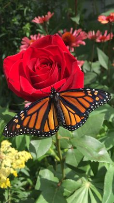 Best Flower Pictures, Beautiful Flowers Pictures, Beautiful Flowers Wallpapers, Beautiful Photos Of Nature, Beautiful Rose Flowers, Beautiful Nature Wallpaper, Beautiful Butterflies, Amazing Flowers, Amazing Nature