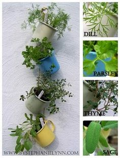Hanging Coffee Cup Herb Garden. Now I know what to do with all those mismatched coffee cups in the cupboard.