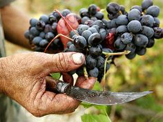 Istanbul for Wine Lovers: A Quick Study on Turkish Wines : Daily Traveler : Condé Nast Traveler