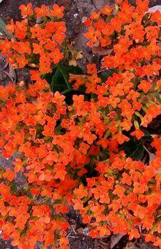 Kendra's filler - orange flowers