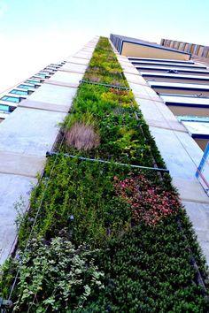 EL 2DO MURO VIVO MÁS ALTO DEL MUNDO ESTÁ EN LATINOAMÉRICA.  El inmenso jardín ocupa una franja en todo lo alto del edificio, cubierta de plantas nativas y adaptables, seleccionadas para soportar el viento y las condiciones climáticas que se sufren con más fuerza en la altura.
