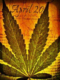 420 friendly ;) marijuana quote ~ ☮レ o √乇 ❥ L❃ve ☮~ღ~*~*✿⊱☮