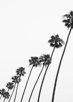 Cali Palms en Affiche sous cadre standard par Shot By Clint