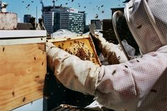 Rooftop Bee Hives - Alto Hotel Melbourne, Australia - Ready to go? Check availability and rates http://www.booking.com/hotel/au/alto-on-bourke.html?aid=802126;lang=en or read our review http://greencitytrips.com/green-boutique-alto-hotel-melbourne/