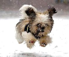 Dashing thru the snow