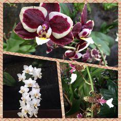 Delicadas y orgullosas de muestran estas orquídeas en enero.