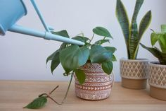 5 Tips για να κρατήσεις τα φυτά σου υγιή το χειμώνα! | ediva.gr Low Humidity, Giving, Houseplants, Planter Pots, Winter, Winter Time, Indoor House Plants, Interior Plants, Plant Pots
