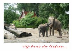 Olifant met jong, elephant with baby. Change text and send as card at Kaartje2go - creagaat dieren