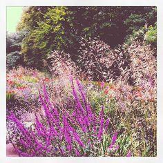 http://www.visitcambridge.org/things-to-do/cambridge-university-botanic-garden-p507411