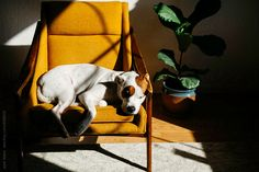 dog sleeping in chair  by jlewis | Stocksy United