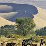 Namibia Country Information Countries Around The World, Around The Worlds, Country Information, Business Visa, African Union, Namib Desert, Tour Operator, The Republic, Tours