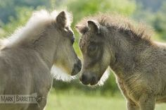 3276-5 :: Horses Stock Photography and Equine Images by Mark J. Barrett