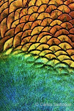 Carlos Sastoque Photography-Nature Patterns