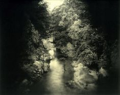 Silver Chameleon: Deep South by Sally Mann