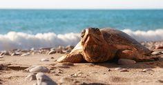 Wir wollen heute den schönen Urlaub feiern. #WeltSchildkrötenTag Lassen Sie diese kleinen Schildkröten Ihnen Glück bringen.