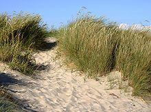 Kystklitter. En klit er i geografi en bakke af sand dannet af vindens bevægelser. Hvid klit. Hvide klitter og vandremiler. Ved en hvid klit forstås en klit, hvor vegetationen endnu er så sparsom, at fygning af sand er mulig. Sådanne tilstande kendetegner som regel de klitter, der ligger tættest på kysten, og hvor der kun findes delvis bevoksning af hjælme eller marehalm, men også vandreklitter (eller miler), hvor bevoksningen ikke kan nå at få tilstrækkeligt fodfæste til at stoppe milens…