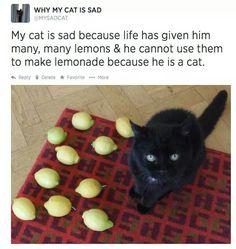Why my cat is sad...