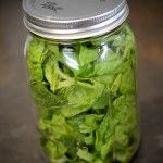 Quick Tip – Storing leafy greens >> This works really well. I put about 2 cups of greens in mason jars at the beginning of the well, and the greens stay crisp and fresh all week. Mason Jars, Glass Jars, Storing Lettuce, Bearded Dragon Food, Conservation, Fruit Animals, Salad In A Jar, Comfort Food, Green Cleaning
