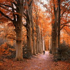 Pull on your walking boots and head into the most spectacular season
