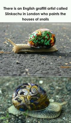 Snail shell art! Cool! My grandma said they used to do this on turtle shells